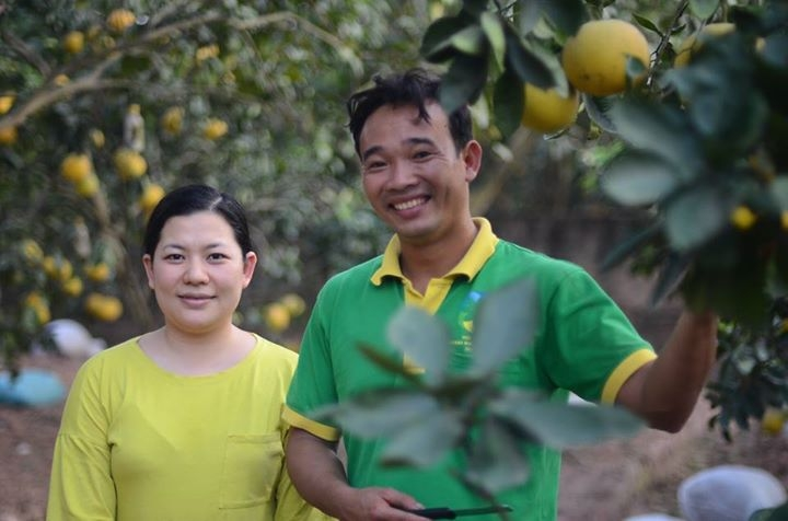 Vườn bưởi Diễn xum xuê không phun thuốc trừ sâu của Nông trại Chi Nông