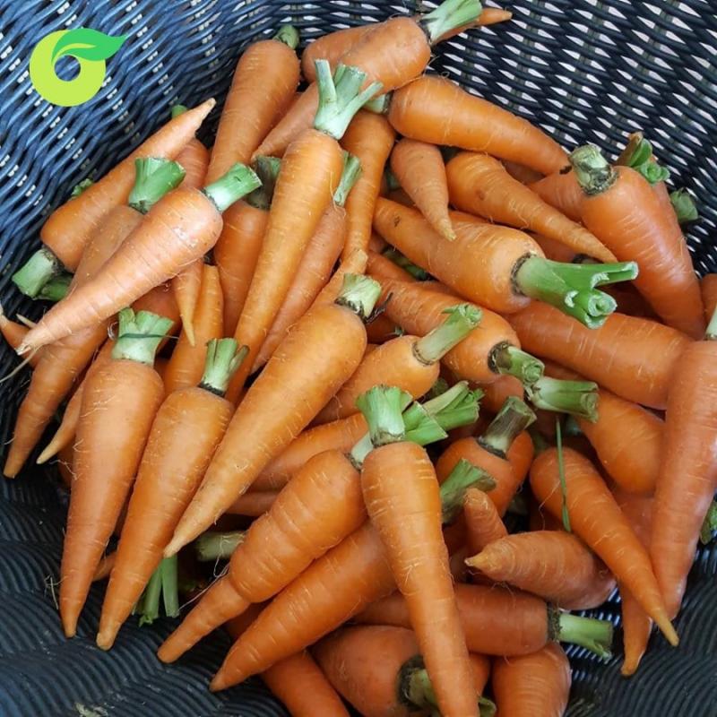 Cửa hàng thực phẩm hữu cơ Organica