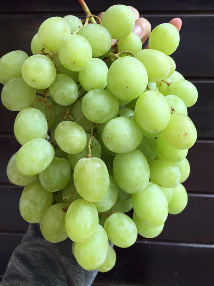 Top 6 Cửa hàng trái cây sạch và an toàn tại Đà Lạt