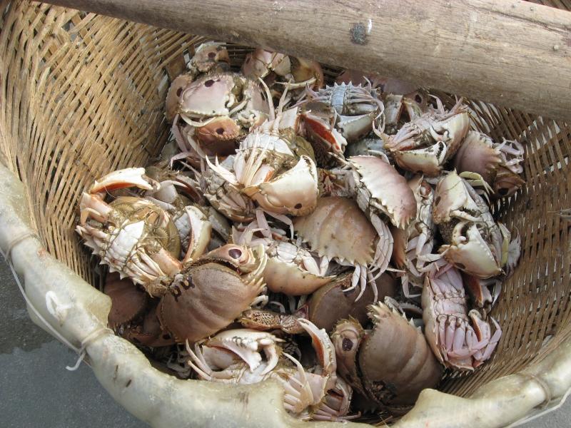 Cúm núm món ăn dân dã của người dân vùng biển quê tôi