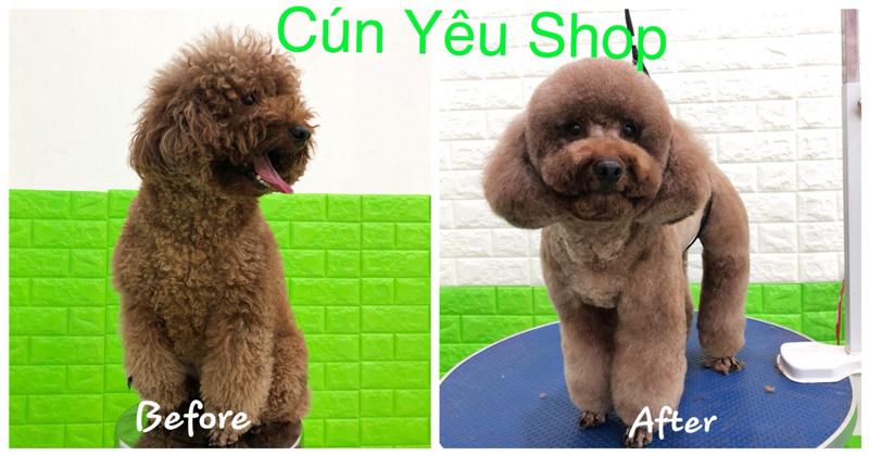 Cún Yêu Shop