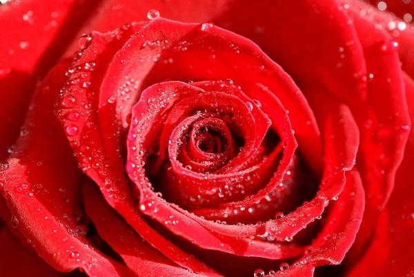 Màu đỏ nóng bỏng và tươi mới sẽ mang đến nguồn cảm hứng bất tận phục vụ cho sức sáng tạo của Bạch Dương