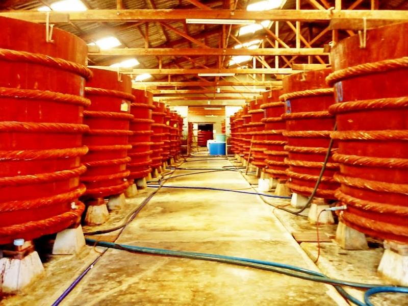 Quá trình ủ khi sản xuất làm tăng lượng B12 trong nước mắm