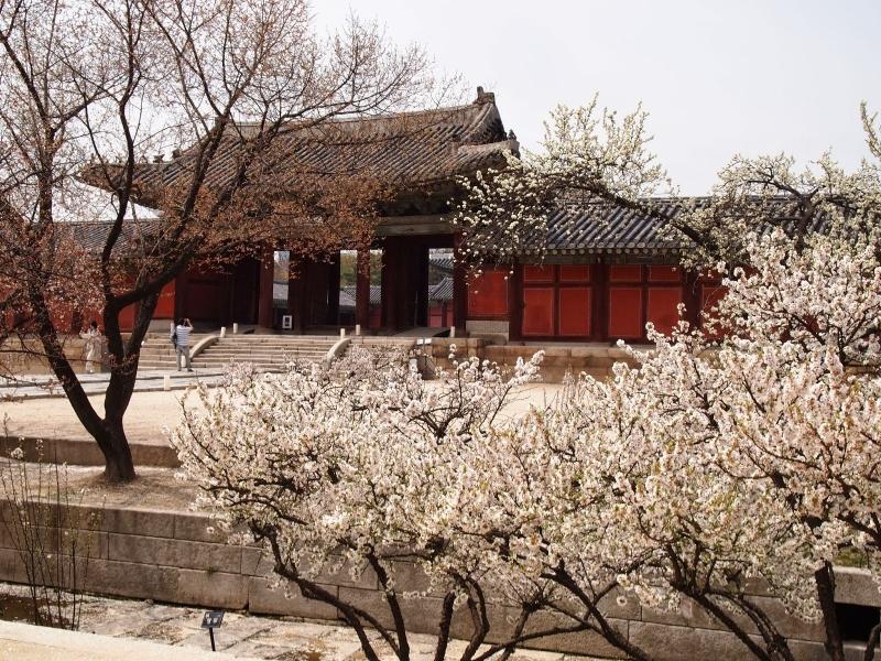 Changgyeonggung là một trong những cung điện cổ kính nhất ở Hàn Quốc