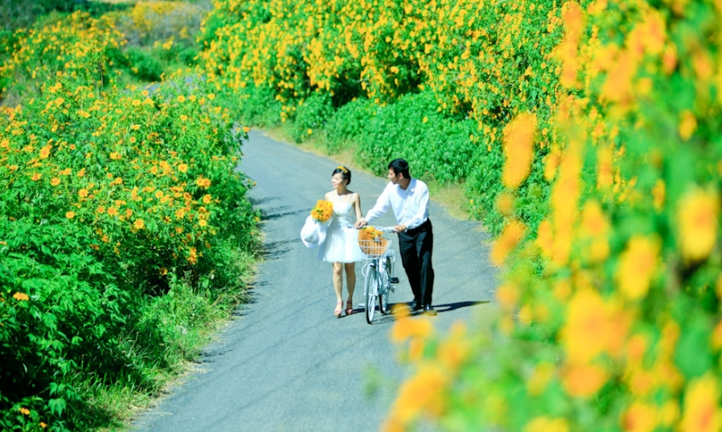 Cùng nhau đi trên cung đường đầy hoa dã quỳ trong bộ ảnh cưới thật nên thơ