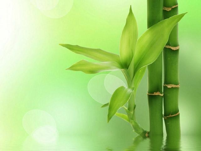Nhân Mã đầy lạc quan, vui vẻ và yêu đời nên cực kỳ phù hợp với màu xanh đầy hi vọng