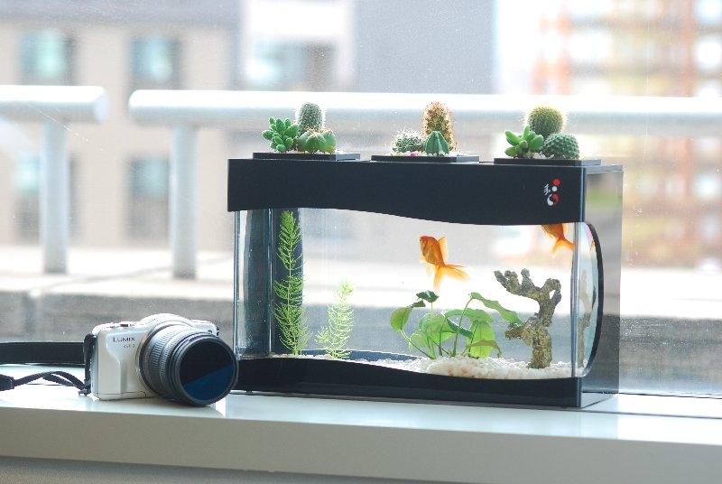 Một bể cá nhỏ sẽ khiến Song Ngư thích mê