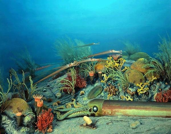 Sinh vật biển trong kỷ Ordovic