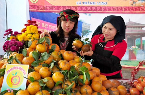 Đặc sản cam sành Hàm Yên