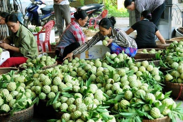 Đặc sản na dai Huyền Sơn - Bắc Giang