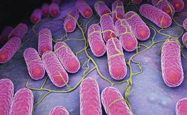 Khuẩn Salmonella, thủ phạm gây ra đại dịch Cocciztli