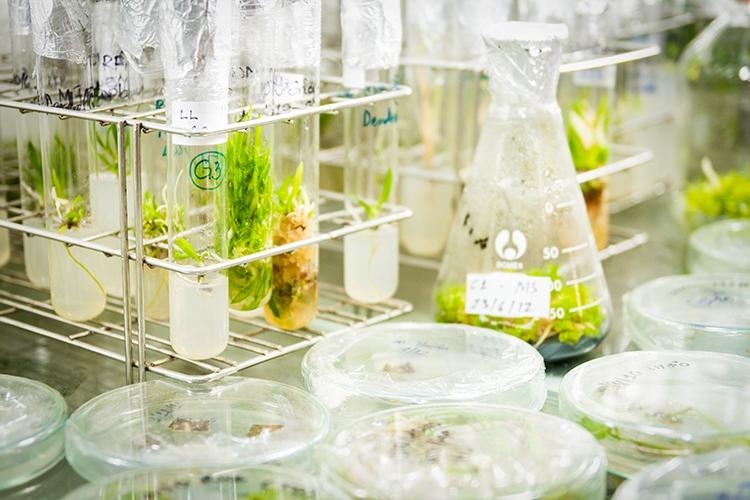 Một góc phòng thí nghiệm Công nghệ sinh học của trường.