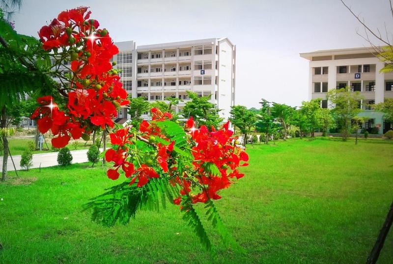 Trường Đại học Luật Huế