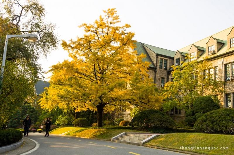Khung cảnh mùa thu thanh bình tại Đại học Ewha.