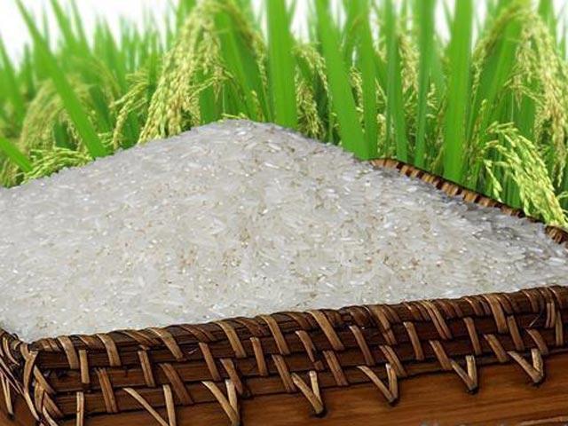 Đại lý gạo An Thành phân phối gạo ngon, giá rẻ
