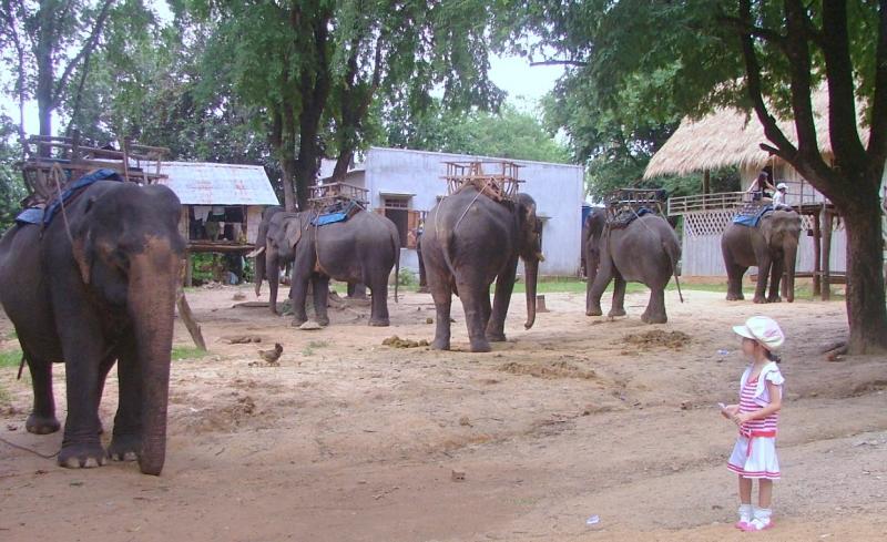 Có thể vừa cưỡi voi vừa ngắm cảnh