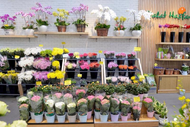 Hiện hoa tươi Dalat Hasfarm đang phân phối tại hệ thống cửa hàng bán lẻ trên toàn quốc, các hệ thống siêu thị lớn
