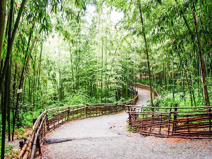 Khi tham quan Damyang, ta sẽ có cảm giác như lạc vào thiên nhiên, vừa tươi mát lại vừa yên bình, tránh xa thành phố tấp nập.