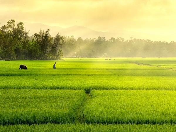 Dàn ý bài văn tả cảnh buổi sáng trên cánh đồng