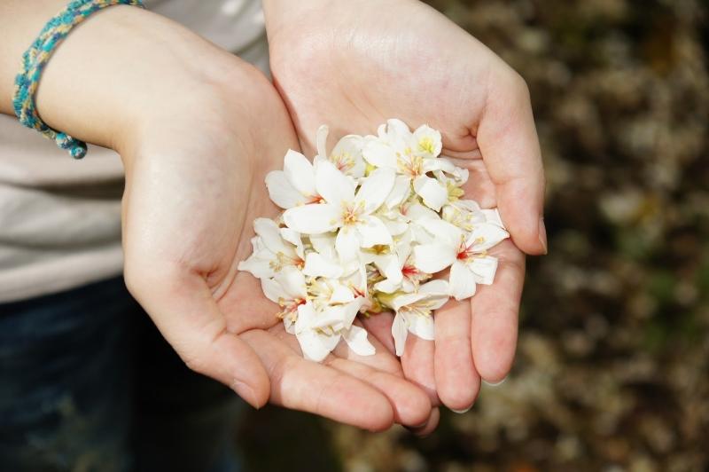 Sự chân thành đẹp tựa những cánh hoa.