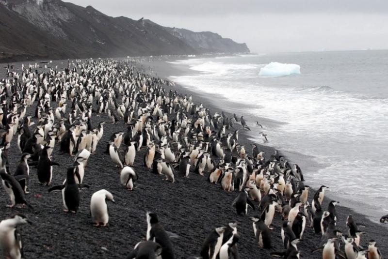 Đảo Deception ở Antarctica