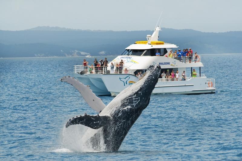 Cá voi ở Fraser