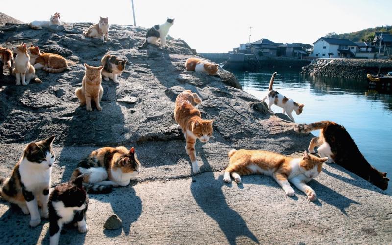 Đảo mèo Tashirojima