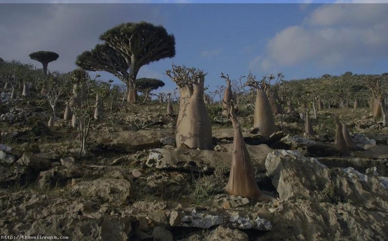 Với những loài cây độc nhất vô nhị, không thể tìm thấy nơi nào khác trên thế giới, Socotra như một hòn đảo ngoài hành tinh.