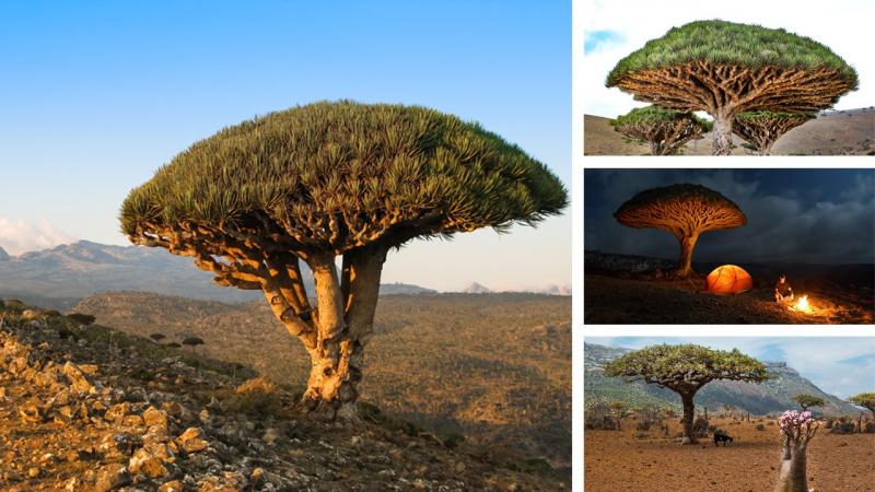 Đảo Socotra, Yemen