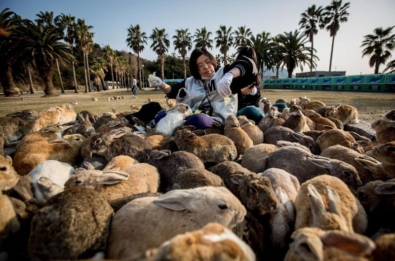 Đảo thỏ Okunoshima