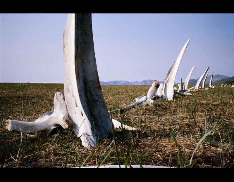 Những bộ xương khổng lồ khiến nhiều người sợ hãi vì nghĩ mình đi lạc ra ngoài hành tinh.