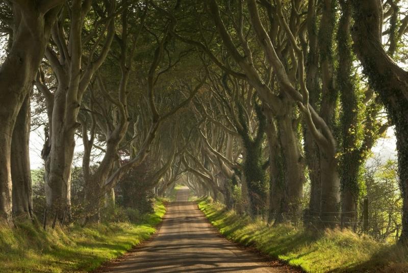 Con đường cây Dark Hedges ở Bắc Ireland mang đến cho người ta một cảm giác ma mị đầy quyến rũ bởi những hàng cây sồi cổ thụ
