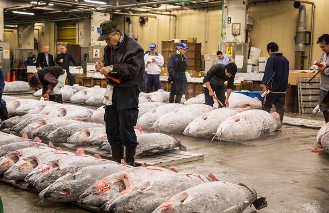 Chợ cá Tsukiji (Ảnh: Irinakalashnikova)
