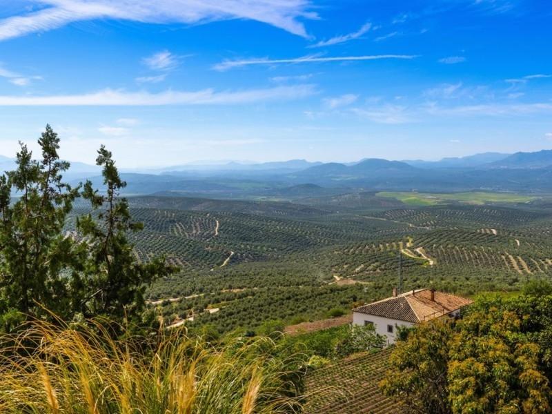 Dầu Olive ở Via Verde Del Aceite