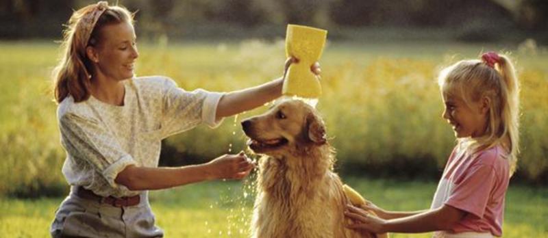 Nên tắm cho chó từ 1 tuần  1 lần để đảm bảo vệ sinh cho thú cưng