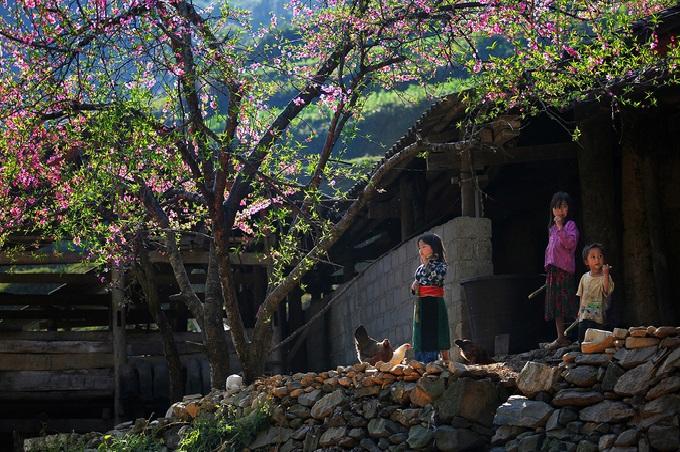 Những đứa trẻ hồn nhiên vui chơi dưới gốc cây đào đang mùa hoa nở rộ