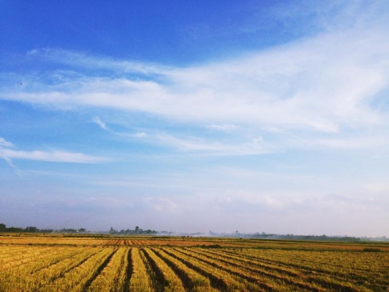 Bạn có thể đi đến nơi nhiều cây xanh, một cánh đồng lúa bát ngát, hay một khu vui chơi náo nhiệt.