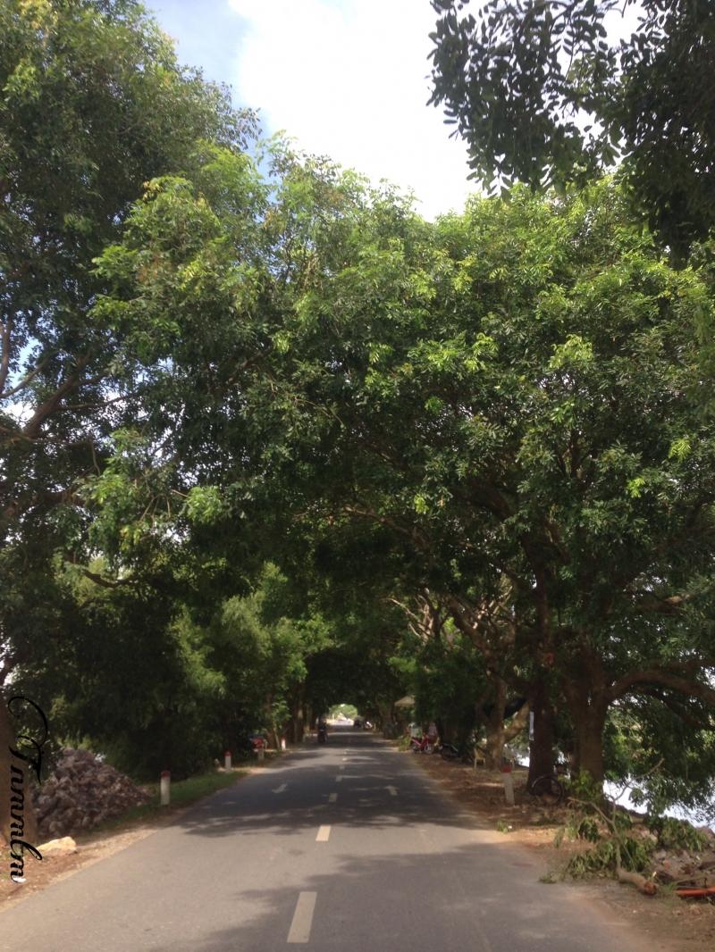 Đi bộ dưới những hàng cây xanh mát là cách tốt nhất để giảm căng thẳng