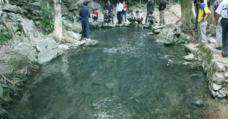 Suối cá thần Cẩm Lương- Cẩm Thủy