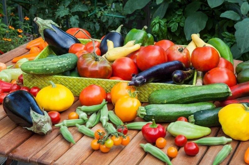 Top 9 địa chỉ bán đất sạch trồng rau đảm bảo nhất ở TP. Hồ Chí Minh