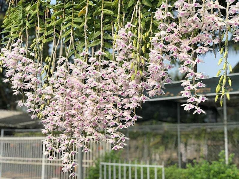 Top 8 Địa chỉ mua cây cảnh đẹp nhất  ở Huế