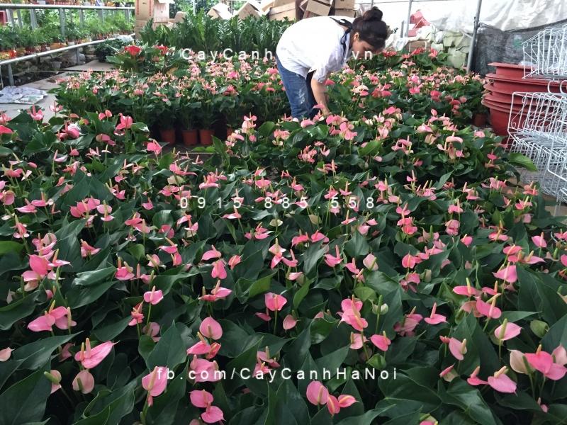 Top 11 địa chỉ mua giống cây ăn quả, cây hoa uy tín nhất Hà Nội