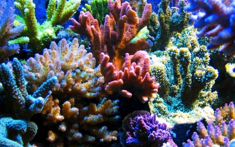 Những rạn san hô