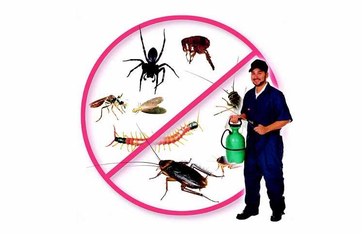 Top 10 Công ty diệt côn trùng tại nhà ở Hà Nội