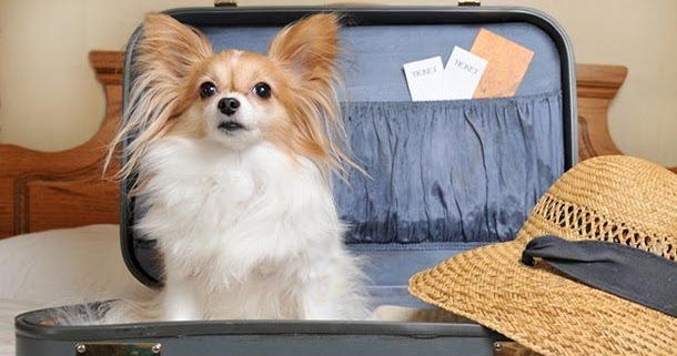 Phuong Anh Petmart - Chuyên cung cấp sản phẩm, dịch vụ dành cho thú cưng