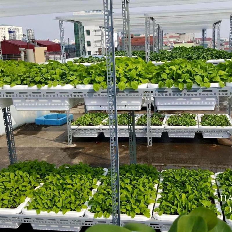 Dịch vụ trồng rau sạch tại nhà ở Đà Nẵng