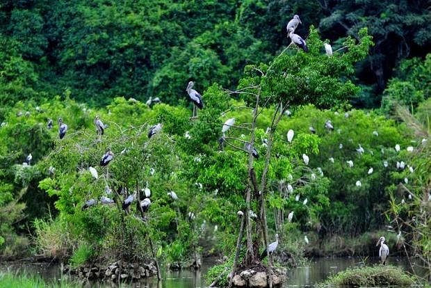 Khu du lịch sinh thái Tân Long nổi tiếng khắp cả nước bởi sự hiện diện của hàng nghìn giống chim như giống Cò, Vạc, Còng cọc,..