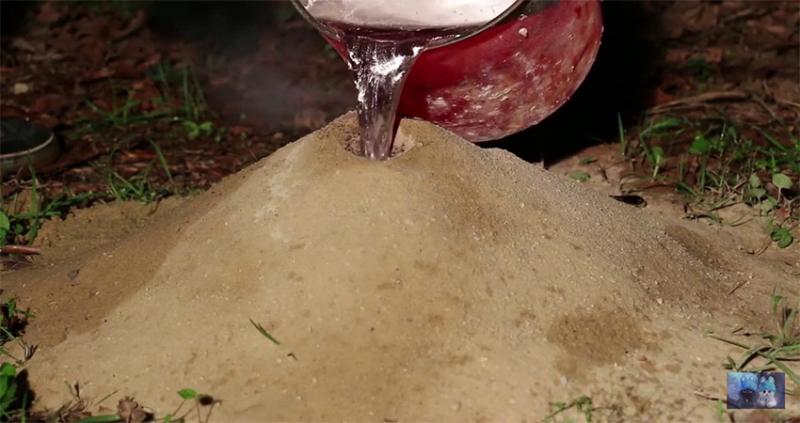 Đổ nước vào tổ mỗi để diệt mối