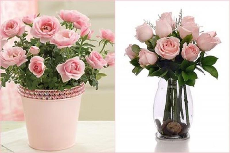 Bó hoa với 100 đóa hồng và anh là đóa hồng thứ 101, khi đó có nghĩa rằng: Anh yêu... yêu em vô cùng!