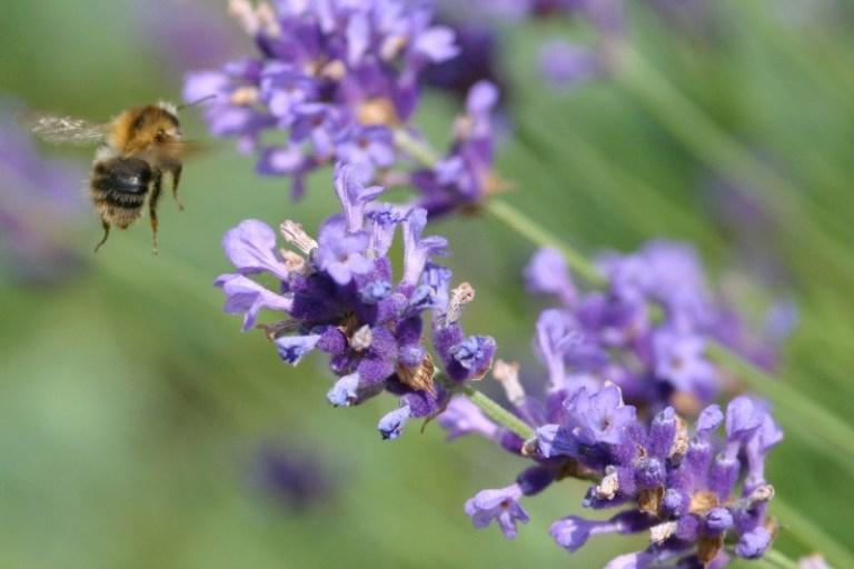 Điều trị ong đốt và côn trùng cắn